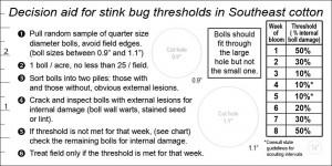 Stink Bug Thresholds