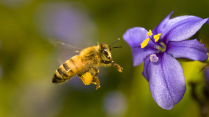 Cover photo for Beginner Beekeeping Course - Starts Tuesday, February 20, 2018