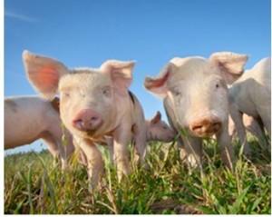 Cover photo for NED Livestock Newsbrief