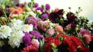 Dahlia cut flowers trial report