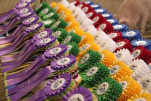 Cover photo for Foothills Livestock Judging Contest