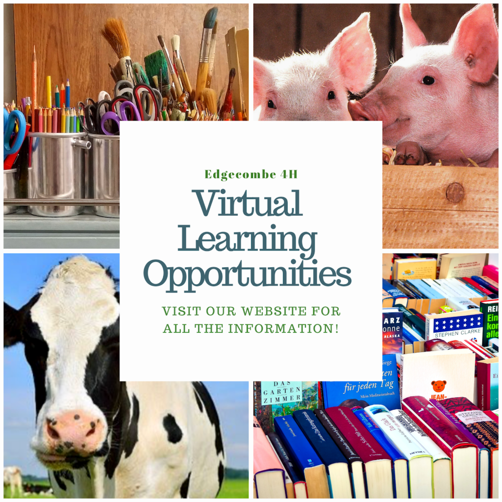 """Visual Learning Opportunities"" infographic, Cow, Pig, Books, Writing Utensils"