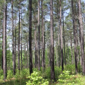 Cover photo for Woodland Owner Webinars on Demand